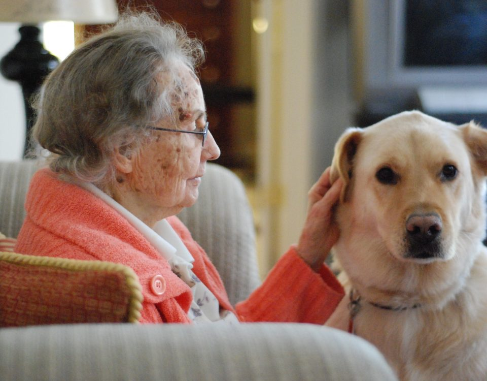 Dog therapy for the elderly